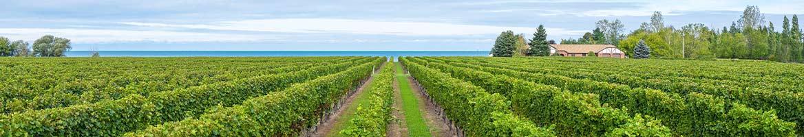 Laithwaites Wine Coupons, Promo Codes & Cash Back